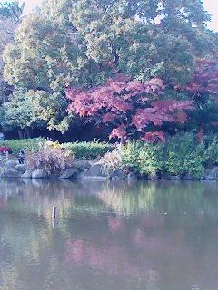 20071206横浜こども自然公園大池の弁財天様.jpg